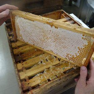 flower-honey-comb-frame