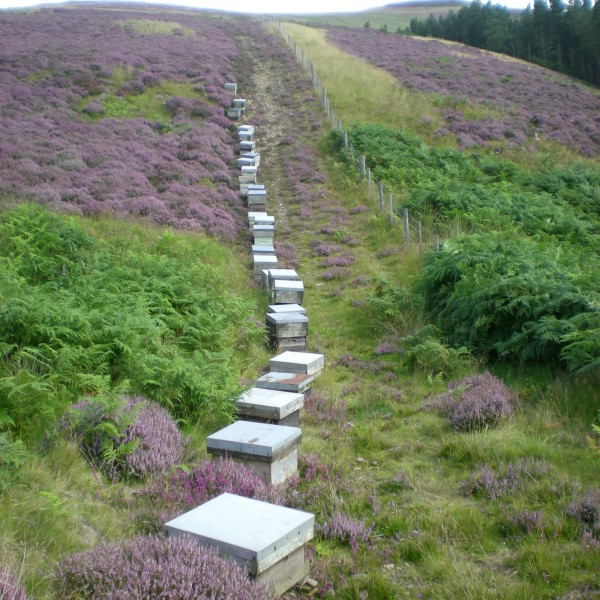 row-of-bees
