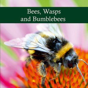 Honey-bees-book-crop